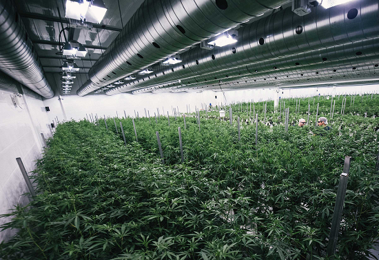 Canopy Growing Facility